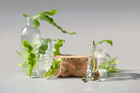 Natural Green laboratory. Brick podium, space for product. Abstract floral arrangement. Reflections of leaves distorted in water. Exotic green leaves in transparent glass vials, jars, Petri dishes. 版權商用圖片 - 166856853