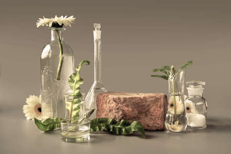Natural Green laboratory. Brick podium, space for product. Abstract floral arrangement. Reflections of leaves distorted in water. Exotic green leaves in transparent glass vials, jars, Petri dishes. 版權商用圖片