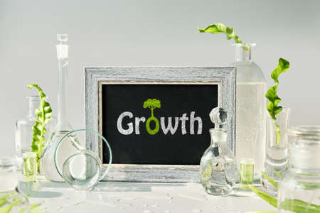 Natural Green laboratory. Text Growth on blackboard, chalk board. Exotic green leaves in transparent glass flasks, vials, Petri dishes. Reflections, floral elements distorted in water. 版權商用圖片 - 166842532