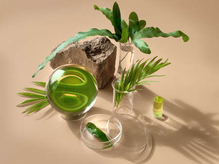 Exotic leaves seen via water in chemical glass, petri dishes, vase. Reflections, optical distortion, illusion. Creative biophilia design. Glass ball, tropical fern, palm leaves.