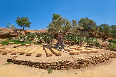 Kolymbethra Gardens, or Jardino della Kolymbethra. magnificent green garden in the heart of the Valley of Temples, Sicily, Italy. Stacks of hay for outdoor concert, natural theater.. 版權商用圖片 - 167150552