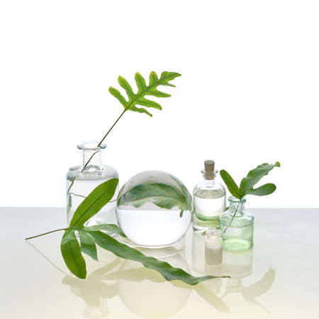Natural Green laboratory. Abstract floral arrangement. Reflections of leaves distorted in water. Exotic green leaves in transparent glass jars, tubes on off white background.