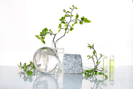 Natural Green laboratory. Abstract floral arrangement. Grey granite podium, space for your product. Reflections of leaves distorted in water. Springtime green twigs in transparent glass jars, glass.. 版權商用圖片 - 166964269