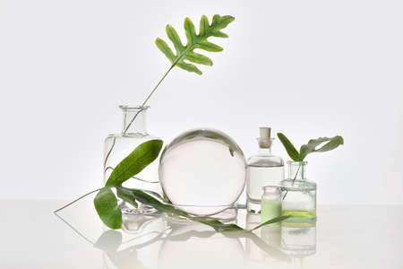 Natural Green laboratory. Abstract floral arrangement. Reflections of leaves distorted in water. Exotic green leaves in transparent glass jars, tubes. 版權商用圖片 - 167112781