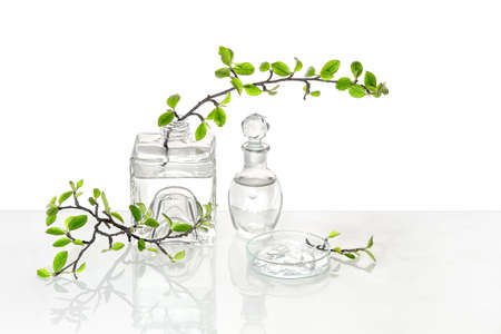 Natural Green laboratory. Abstract floral arrangement with transparent glass vase and vial with liquid product. Reflections of leaves distorted in water. Spring green twigs with green twigs in jars.