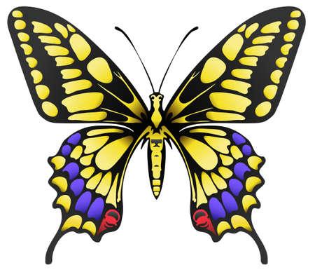 антенны: Иллюстрация большая желтая бабочка махаон, изолированных на белом Иллюстрация