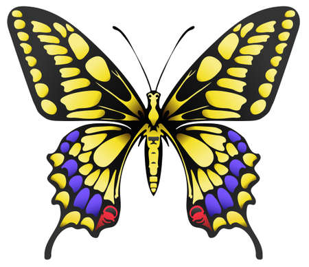 detail: illustration of big yellow machaon butterfly isolated on white