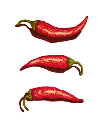 chilli pepper: Juicy Red Chili Peppers illustration isolated on white