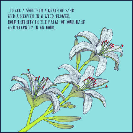 Hand drawn background with white lily branch for greeting cards, invitation etc. Vector illustration Illustration