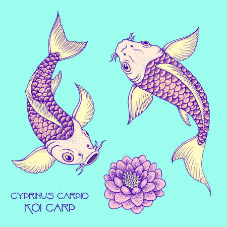 Couple of traditional japanese Fancy Carp. Hand drawn ink vector illustration