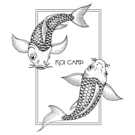 Coppia di tradizionale giapponese Fancy Carp. Illustrazione vettoriale mano disegnato inchiostro