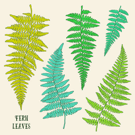 Fresh green ink hand drawn fern leaves isolated on white background. Vector iilustration Illustration