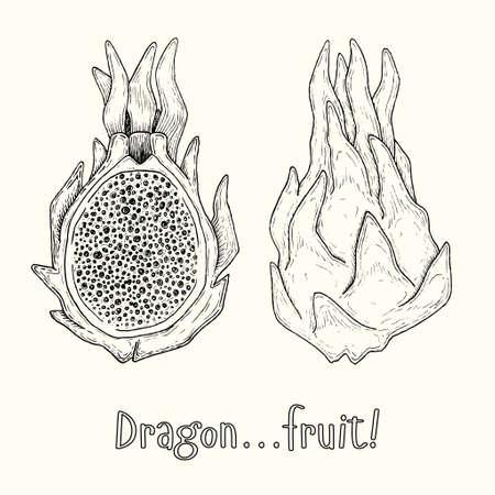 Couple of asian exotic Dragonfruits or Pitaya. Hand-drawn ink vector illustration