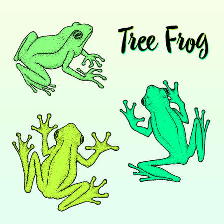 Realistic tree frogs ink hand-drawn vector illustration