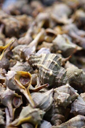 cockleshells: Cockle-shells