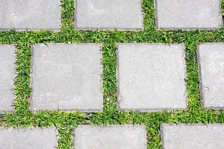 Grass betreen stones photo