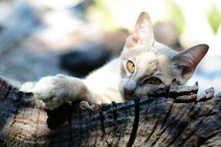 gato gris: Gato gris  Foto de archivo