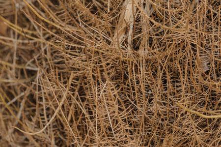 pflanze wurzel: Pflanzenwurzel