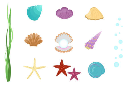 Seashells and starfish set. Vector collection of underwater elements on white background.