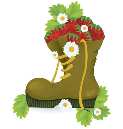 hiking boots: Strawberries old shoe and daisy flowers close-up illustration on white background