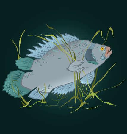 illustration of gray fish swimming in seaweed  Çizim