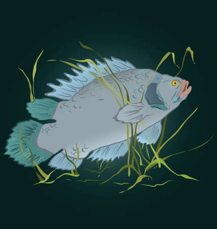 fishes: illustration of gray fish swimming in seaweed  Illustration