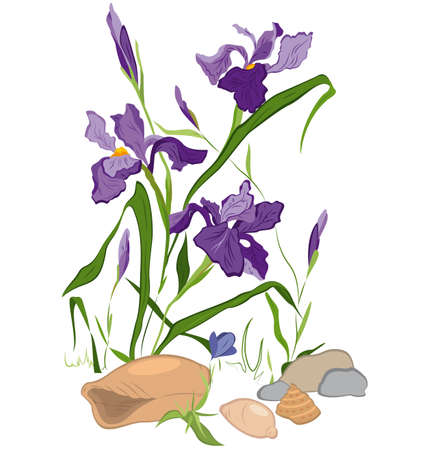 Hand drawn illustration of Iris blooms flowers isolated on white.  Vector
