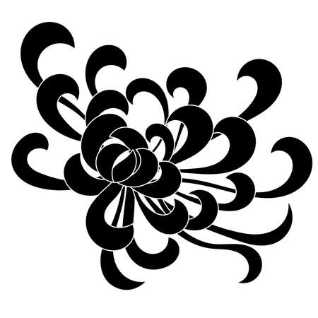 aster: Aster flower black isolated on white