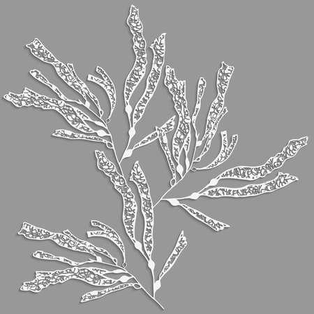 Kelp sea weed 3d with realistic shadow