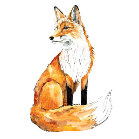 watercolor drawing depicting a sitting Fox