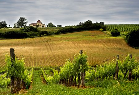 French winery in Aquitaine Stock Photo