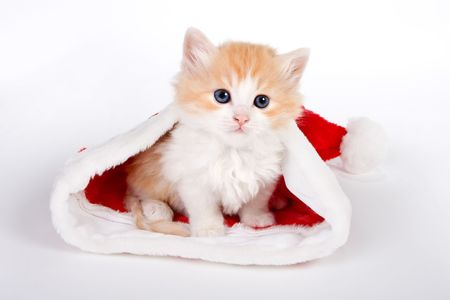 Little red kitten in a christmas hat Stock Photo