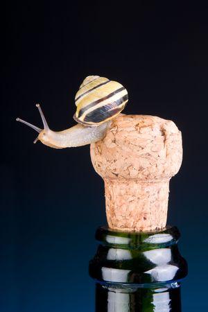 Escargot Drôle Assis Sur Le Bouchon D'une Bouteille De Champagne Banque  D'Images Et Photos Libres De Droits. Image 3727618.