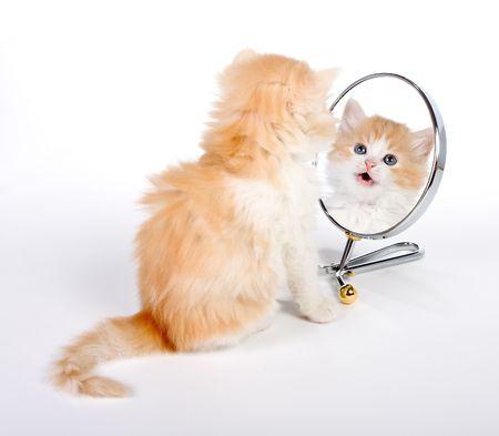 Zes weken oud kitten kijken in een spiegel