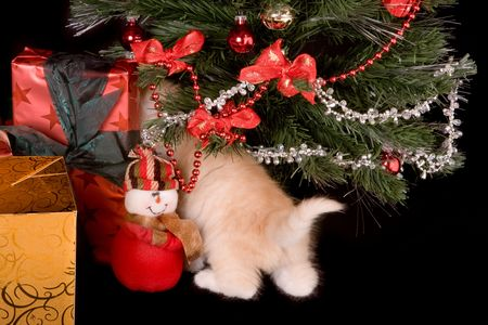 6 weeks old kitten under a christmas tree Stock Photo - 3744506