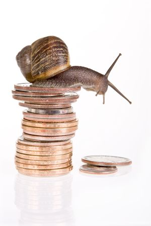 Funny snail sitting on a stack of dollar coins photo