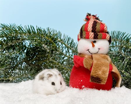 hamsters: Little white hamster joining a snowman with christmas