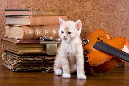fiddles: Six weeks old kitten on a table with antique books and violin