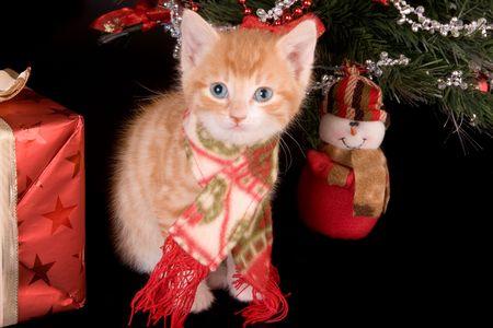 6 weeks old kitten under a christmas tree photo