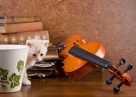 Little kitten on a table with a violin and antique books Stock Photo - 3790909