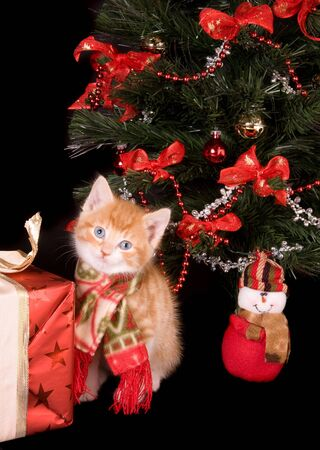 6 weeks old kitten under a christmas tree Stock Photo - 3835110