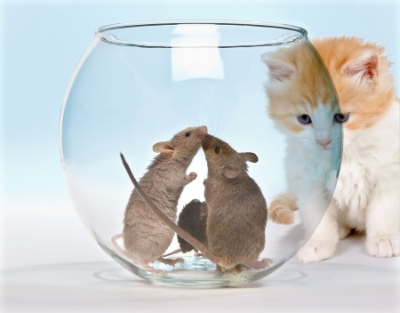 Little red kitten observing three mice in a safe fish tank Stock Photo - 3835093