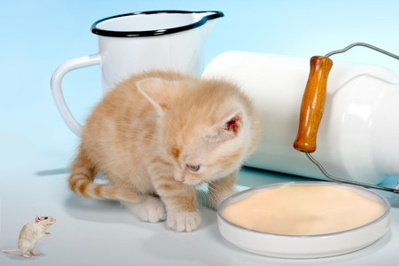 newborn rat: Little red kitten looking at a mouse asking for milk