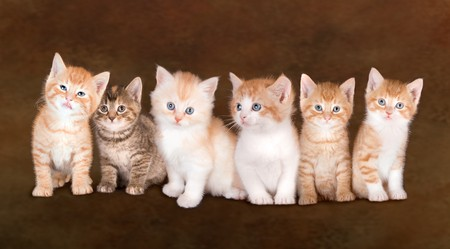 Collage of six cute kittens of one family Stock Photo - 3998237