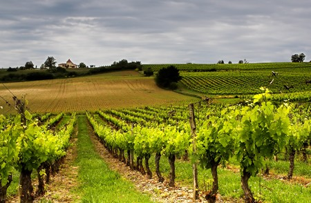 French vineyard near the river Lot Stock Photo
