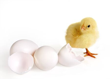 Little easter chick (24 hours old) and three eggs Stock Photo - 4086441