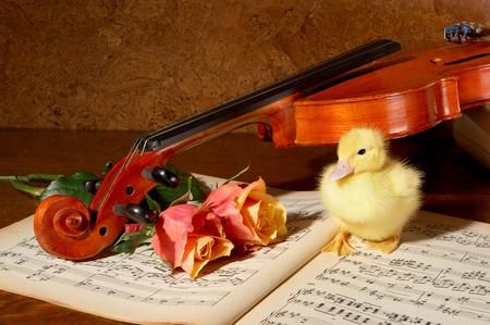 webb: Four days old easter duckling enjoying music