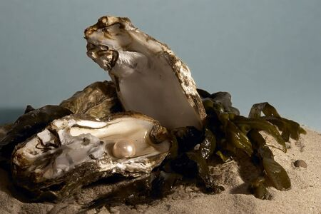 pearl shell: Fresh water pearl in open oyster shell Stock Photo