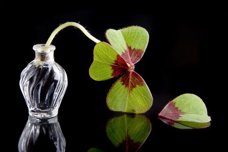 Four leaf clover loosing on of its leaves, sign of misfortune Stock Photo - 4330334