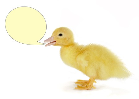 4 days old easter duckling with a text balloon Stock Photo - 4330321